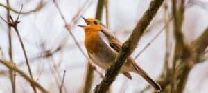 ingend mediteren zingen vogel